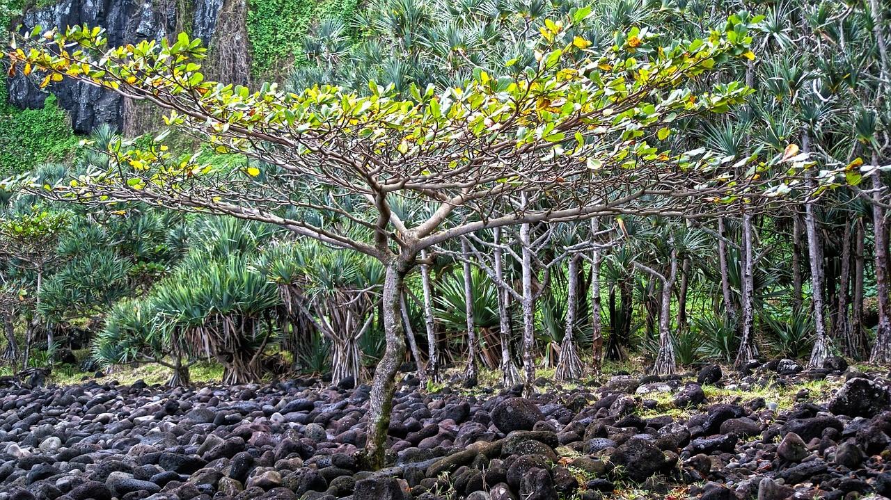 arbres_lareunion