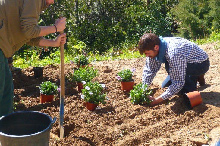choisir les plantes à cultiver dans son espace vert
