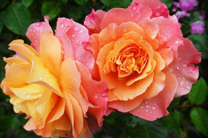 avoir des fleurs fraiches à la maison