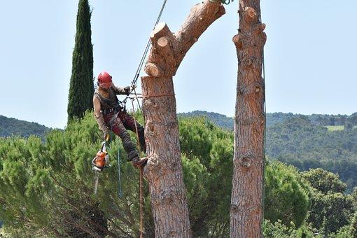 estimer le coût des travaux d'élagage d'arbre