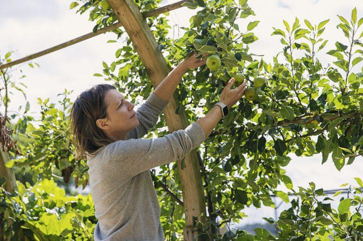 prendre soin de ses arbres fruitiers