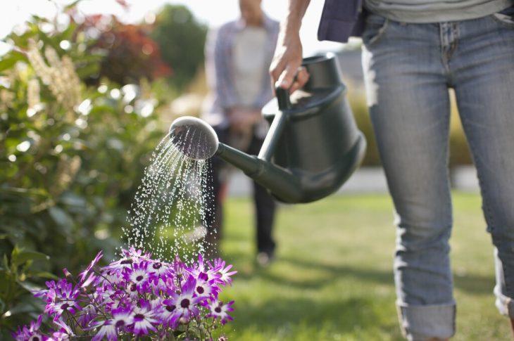 arrosage efficace de son jardin