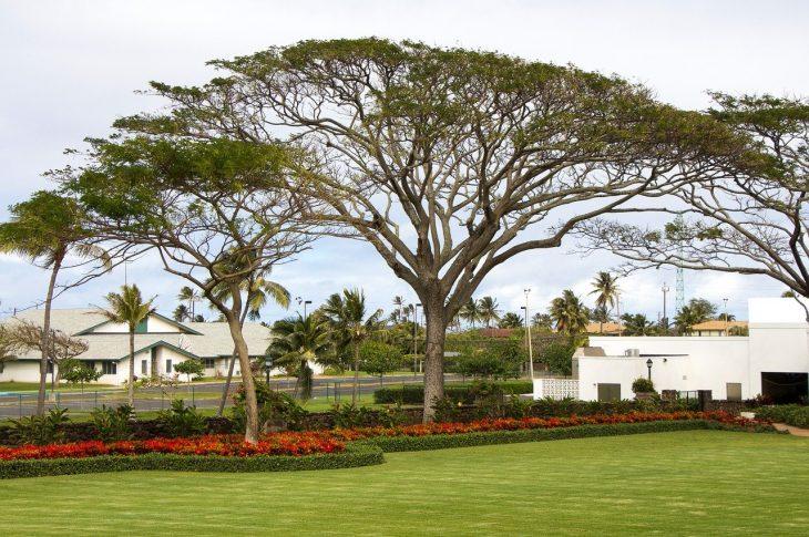entretenir les arbres pour un jardin harmonisé