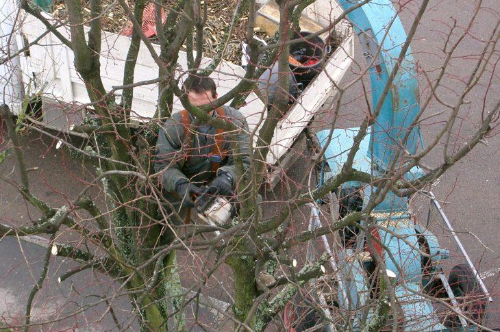 entretenir les arbres de son jardin