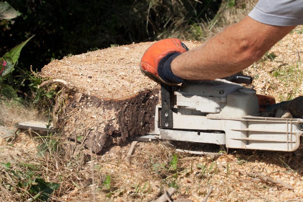 retirer une souche après l'abattage d'un arbre