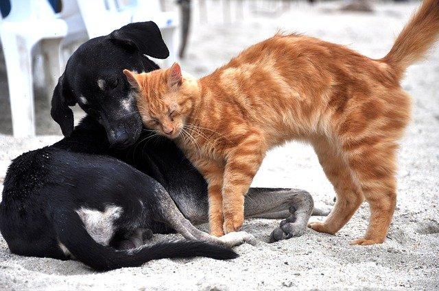 couverture chien ou chat
