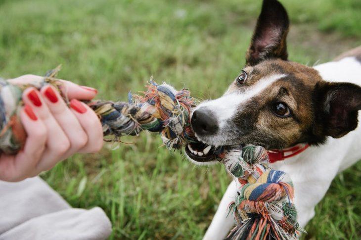 Comment jouer au tug avec son chien ?